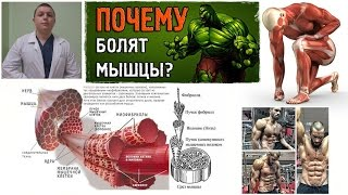 видео Забитые мышцы. Молочная кислота. Как работают мышцы. Что делать при болях в мышцах