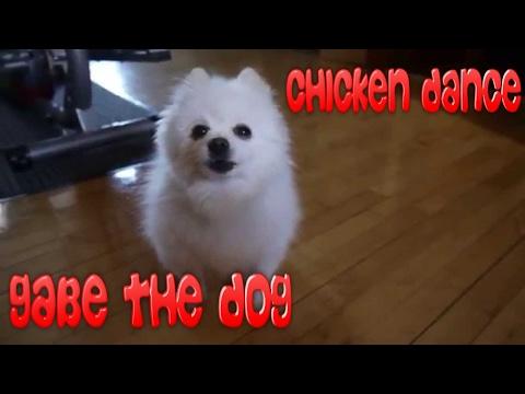 Gabe The Dog - Chicken Dance! [REMIX] Freeze