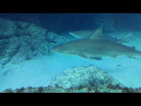 Atlantis Marine Habitat - Paradise Island, Nassau Bahama's.
