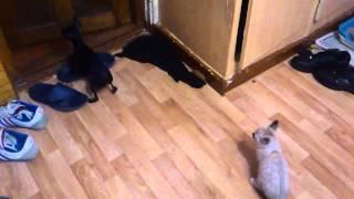 кот задрочил собаку