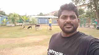 Testing new 4K video | Malaysia DOG training | SAMSWAY™