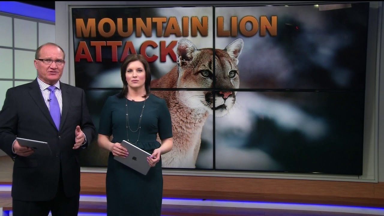 bb0d06b1b Man attacked by mountain lion while running on trail in Northern Colorado