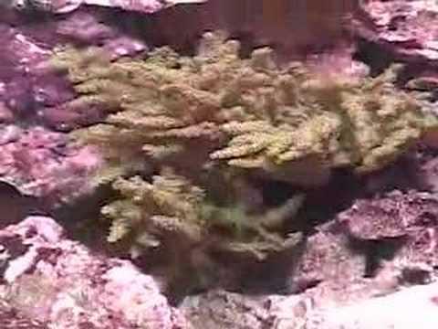 ZeroEdge Aquarium - The  HiDef of Aquariums