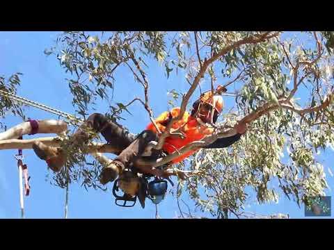 Tree Pruning Brisbane