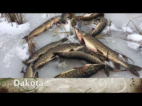 Ролик Зимняя рыбалка. Ловим щуку на жерлицы.HD