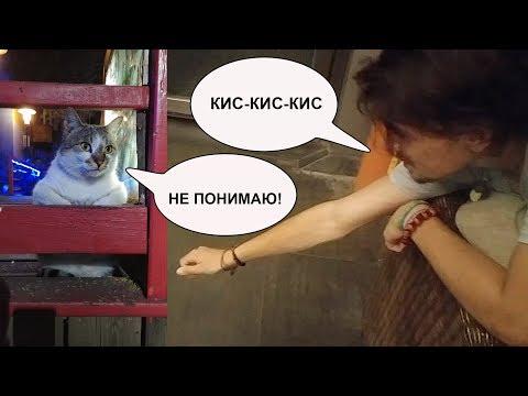 КИС-КИС-КИС или Как подзывают кошек в разных странах