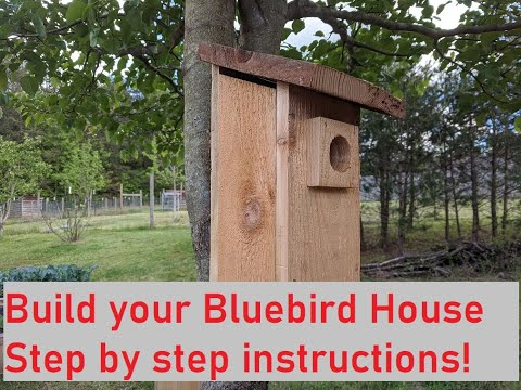 Build Your Own Bluebird House, Step By Step Instructions!
