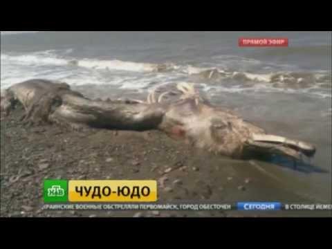 На побережье Сахалина выбросило тушу трехметрового монстра