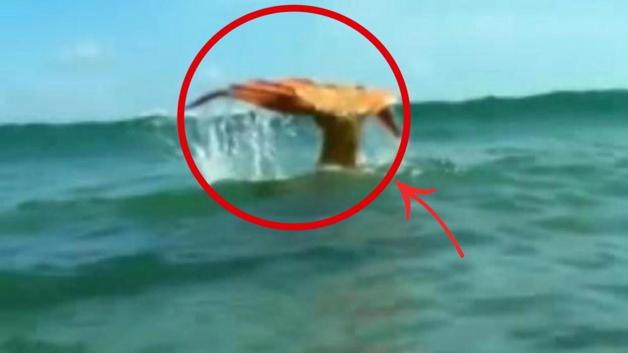 Las 6 criaturas m s extra as del fondo del mar que no - Fotos fondo del mar ...