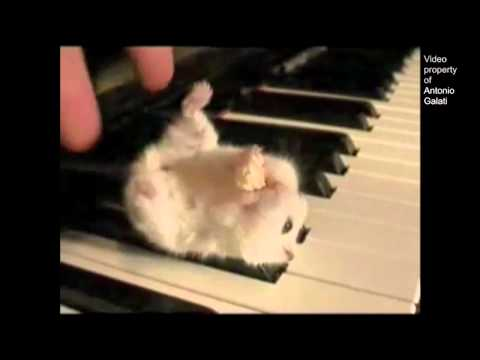 Hamster On A Piano Eating Popcorn  Parry Gripp