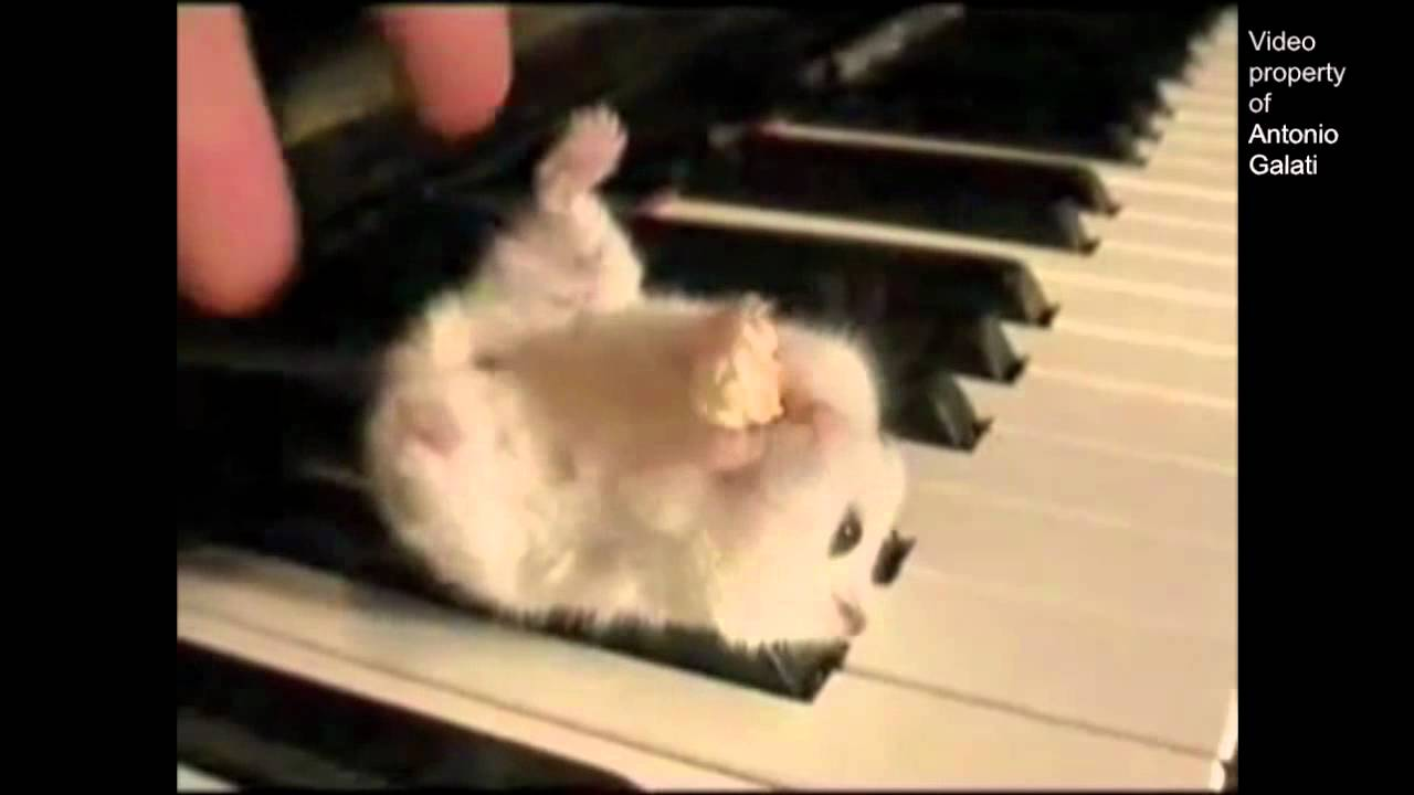 Hamster On A Piano Eating Popcorn  Parry Gripp  YouTube