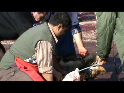 Kurban Kesimi KKB 2011  Slaughter sacrifice  Turkey Ankara Women