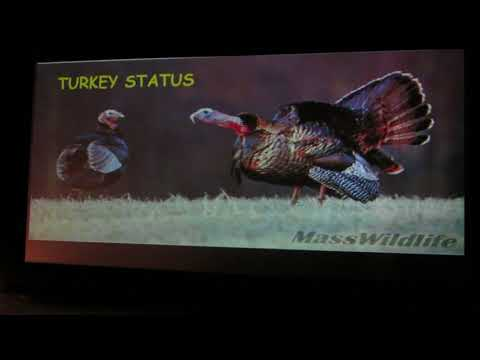 The Great American Turkey Success