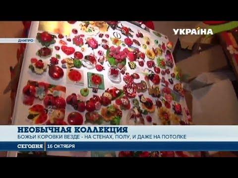 Сегодня: Жительница Днипра собрала коллекцию с более десяти тысяч божьих коровок в различных образах