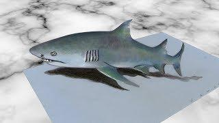 GREY SHARK ILLUSION - How to Draw 3D Shark - Trick Art by Vamos