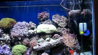 part 2 my 55 gallon marine salt water aquarium coral reef fish tank led lights saltwater avi