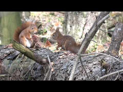 Vroege Vogels - Familie eekhoorn