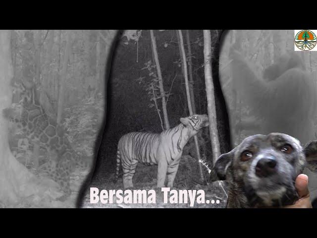 Ma technique pour régler les pièges photos dans la jungle   ?