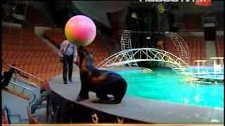 Тонные воды вылились на арену цирка