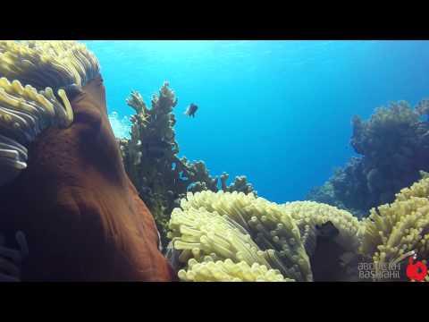 Red Sea Yanbu