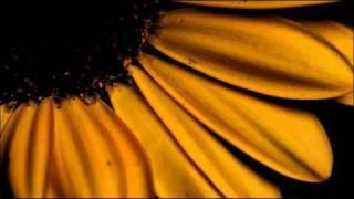 Antonio Vivaldi: Concerto for violin, strings & b.c. in B flat major (RV 369) - I.II.