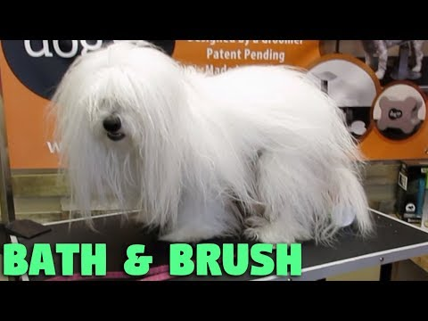 How to brush and bathe my long hair dog