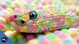 Why Is My Snake So Pretty? SnakeBytesTV - Ep 387 : AnimalBytesTV