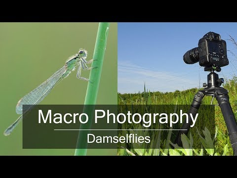 Wildlife Photography in the  Field: How to Photograph Insects