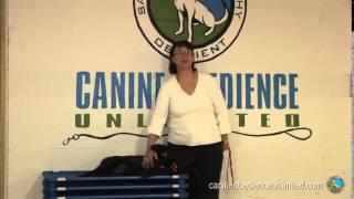 Maryland Dog Training  Testimonial   Jan & Carley