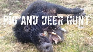 Pig & Deer Hunting New Zealand
