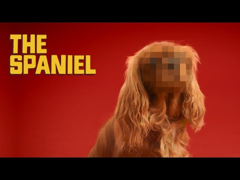 Canine Confessions - The Spaniel