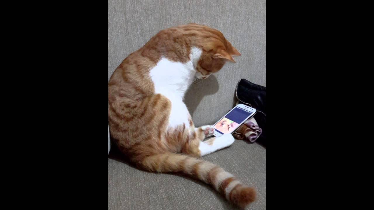 Did this cat really cuddle up to a video of his former owner