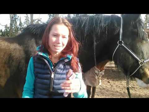 Hilfe - mein Pferd lässt mich nicht an seine Hufe!