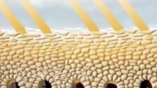 Eucerin Sonnenschutz Thumbnail