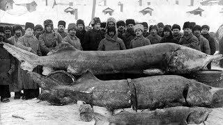 Русская Рыбалка 4 ВЫЗОВ ПРИНЯТ ВНИМАНИЕ Возможен бесконечный стрим