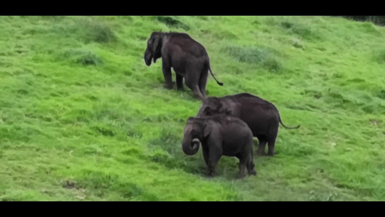 chinnar wildlife sanctuary / elephant / 2018