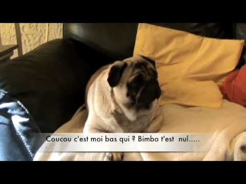 chien drole le carlin - YouTube