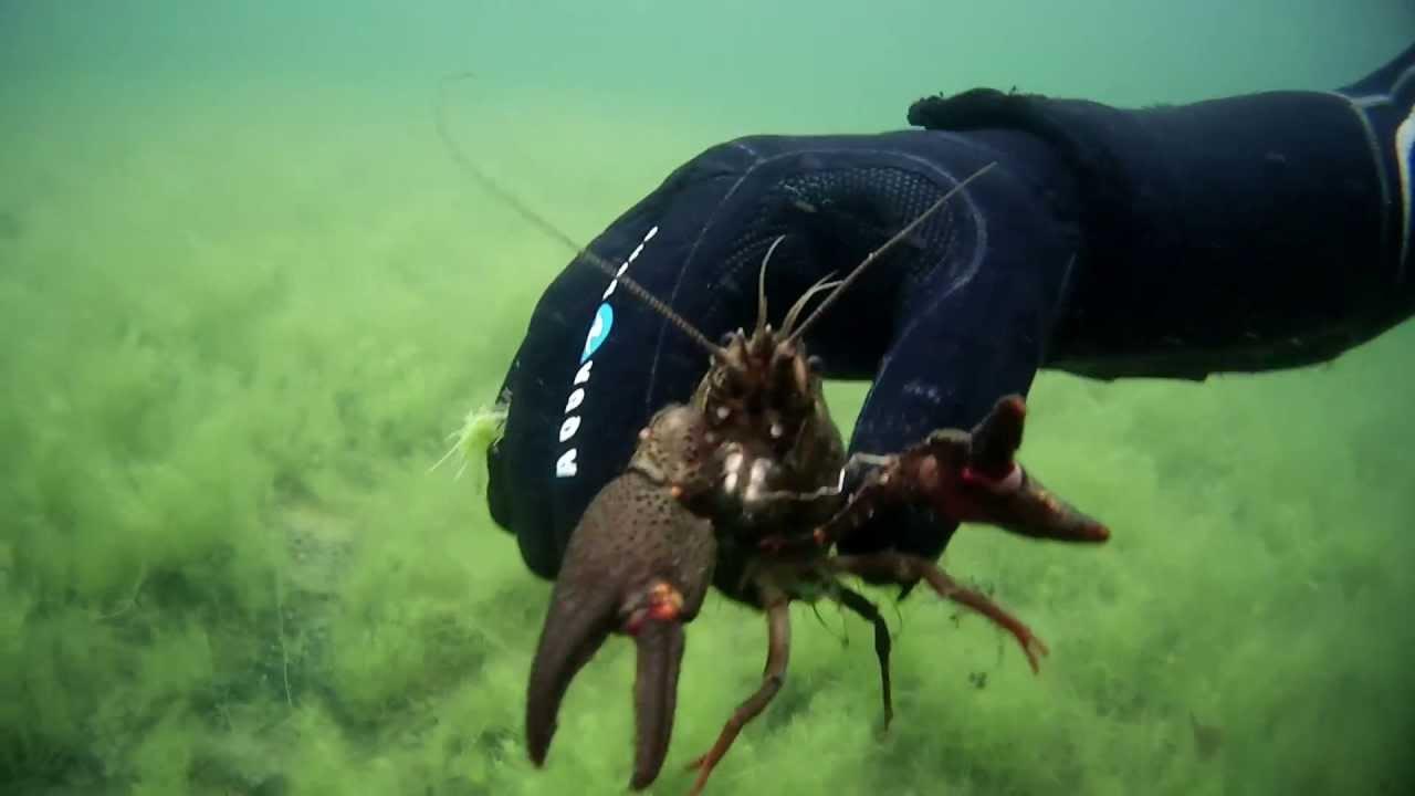 Unterwasser Tiere