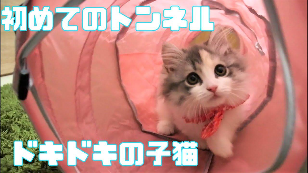 【ドキドキ】初めてのトンネルではしゃぐ子猫が可愛い