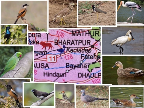 The best place for birding..Keoladeo National Park -  Bharatpur Bird Sanctuary, Rajasthan