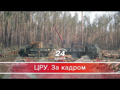 ЦРУ. За кадром. Що насправді коїться в українських лісгоспах: вражаюче розслідування