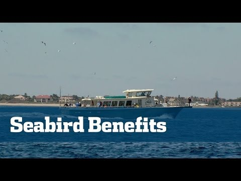 Sea Birds; Birds Lead The Way To Hot Action - Florida Sport Fishing TV