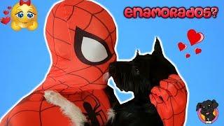 ¡LANA conoce a SPIDERMAN! / Mi perro cachorro juega con un Superhéroe