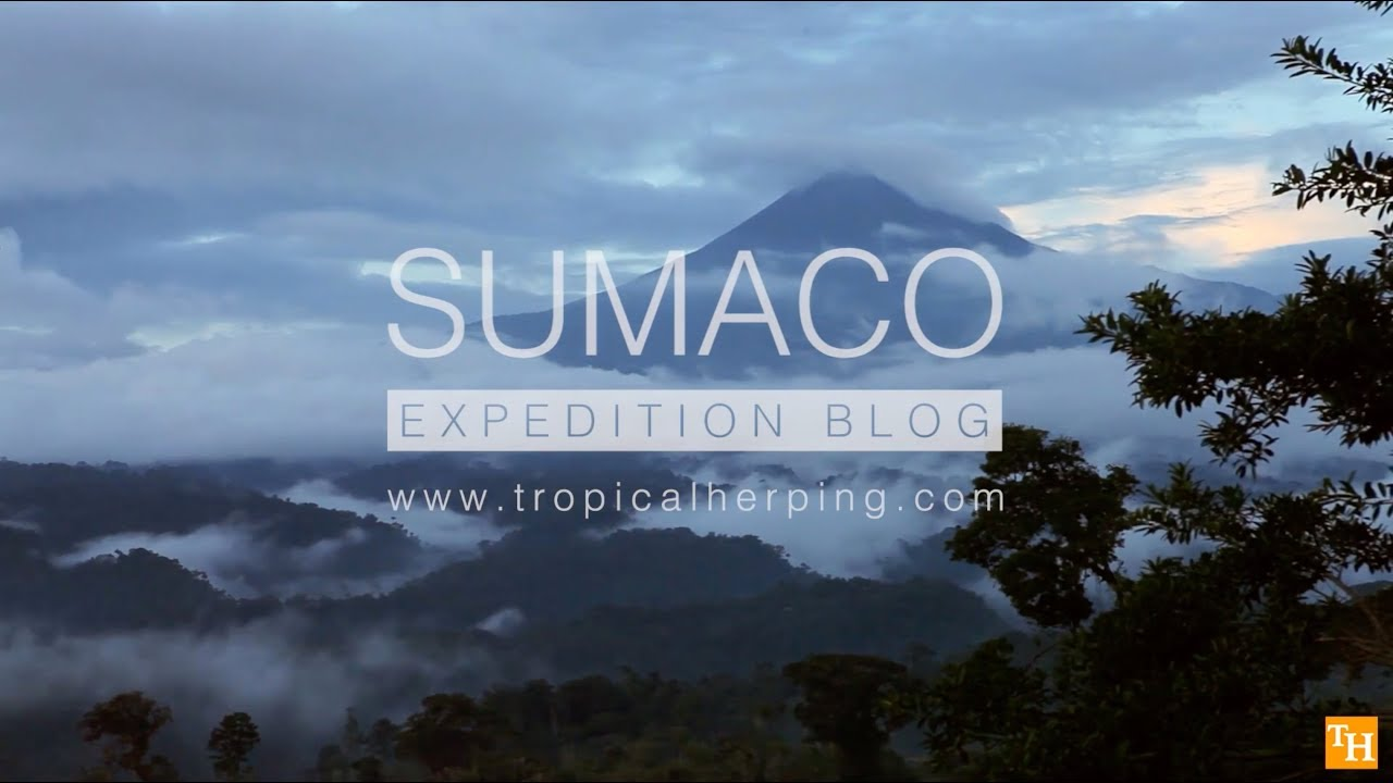 Sumaco expedition blog