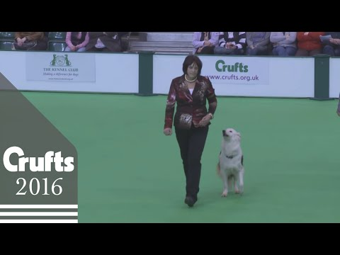 Dog Obedience Championship - Part 1 | Crufts 2016