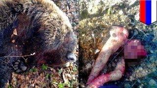 Россиянка выжила после нападения медведя
