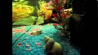 my 64l fish tank