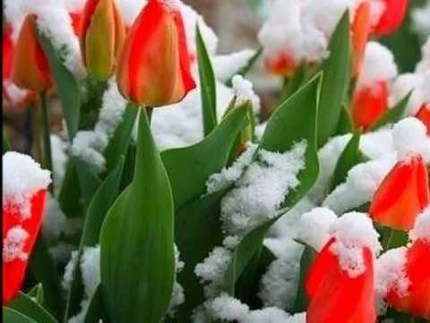 Стихи про весну. Агния Барто Веревочка. Стихи для детей. Читает Софья Селиверстова