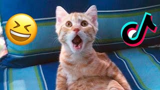 🎶 Best Tik Toks of Funny Dogs and Cats 🐱🐶 Compilation of Pets Tik Toks