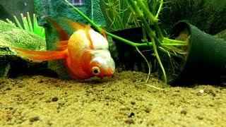 Ошибки начинающего аквариумиста, основные секреты аквариумиста.